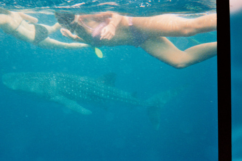 Swim with Whale Sharks - The Philippines