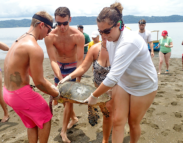 Turtle Conservation Project in Central America