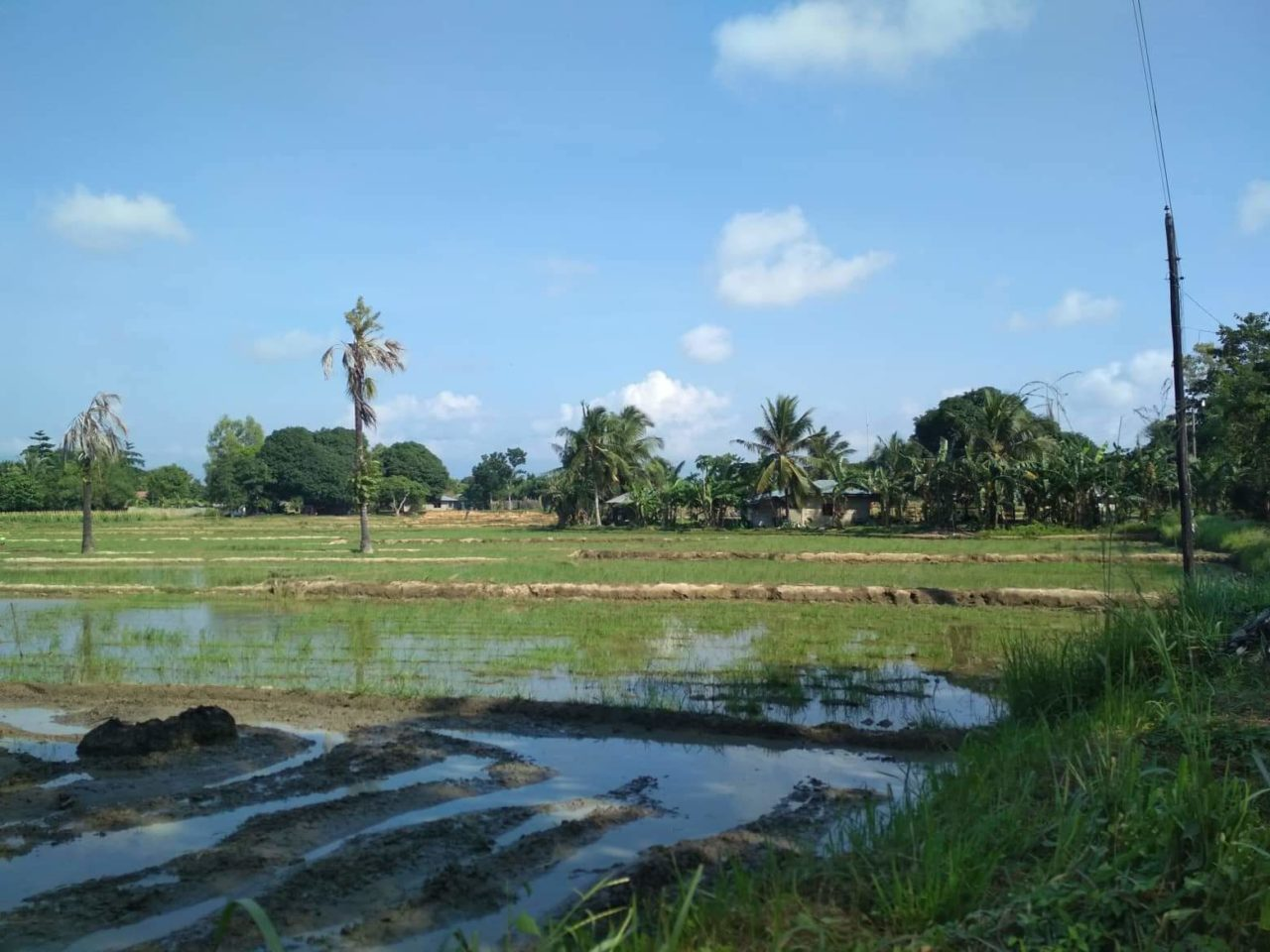 The Village Land in the Philipines